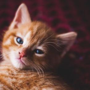 Pourquoi vermifuger votre chat ?