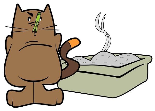 la diarrhée chez le chat