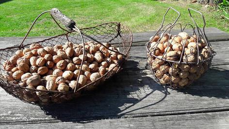 Ramassez vos noix aux Arts du Bout