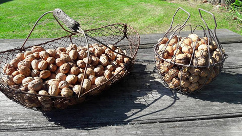Walnuts at Les Arts du Bout