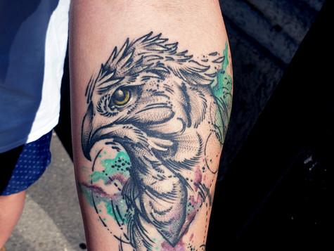 Hawk watercolor