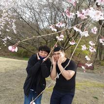 20200331 카이스트 벚꽃
