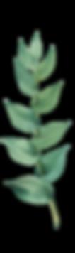 Plantas (10).png