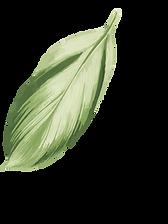 Plantas (33).png