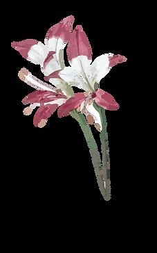 Plantas (17).png