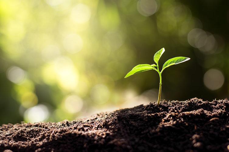 mediation-grow-today