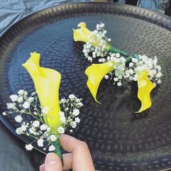 Gul calla lilja er ótrúlega björt og fal
