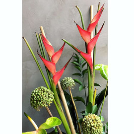 Tropical 🌴🌱_._._._._._._._._._._.jpg
