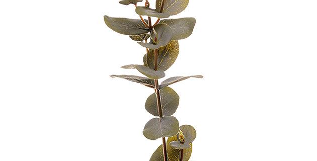 Eucalyptus grein