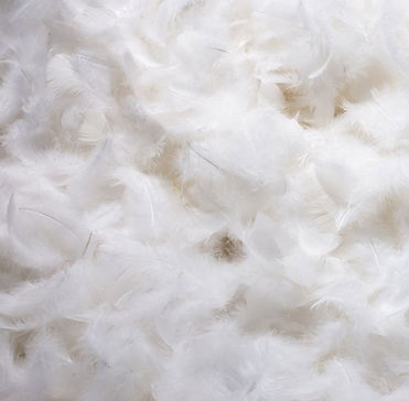 best-feather-pillows-goose-feather.jpg