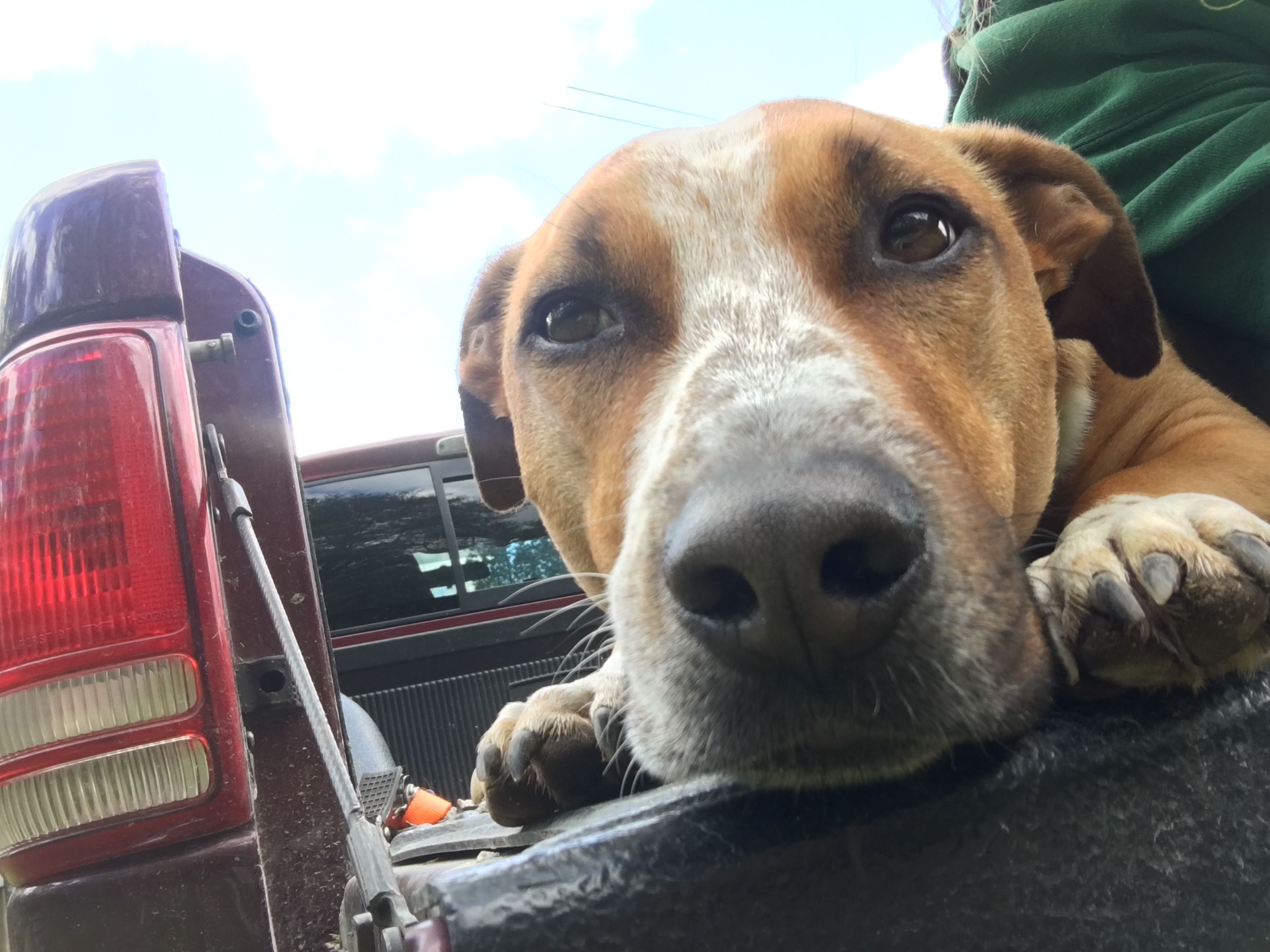 Conner found the work truck again.