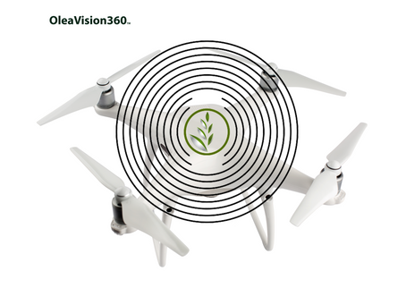 Introducing OleaVision360