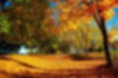 Autumn Walk_edited-1.jpg