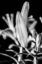 s_IMG_0170.jpg