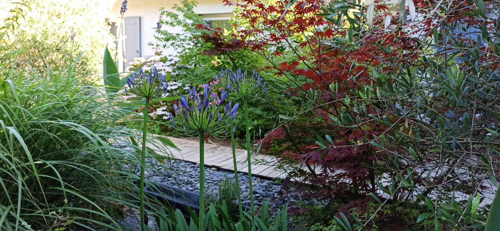 jardin R.jpeg