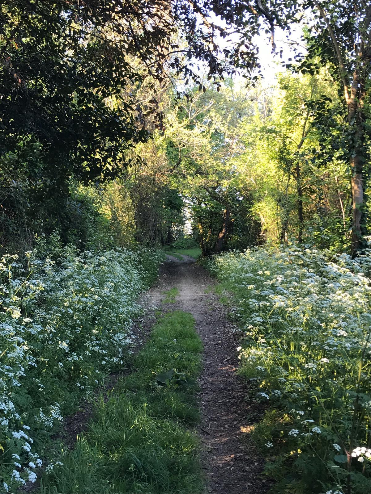 Chemin pédestre à St Loubes