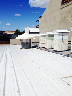 Hives on a roof of a cafe in Sydney