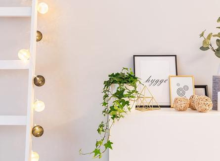 Plantas em ambiente interno: 5 opções para dar um toque aconchegante na sua casa