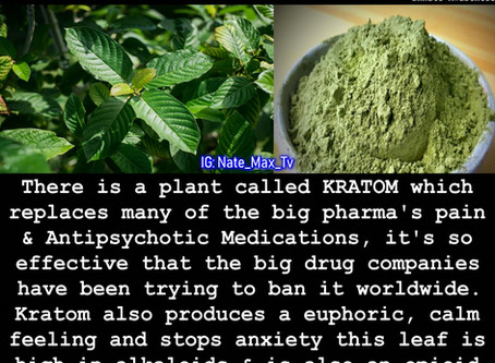 Super Food that replaces big pharma drugs... No wonder they are trying to make it illegal
