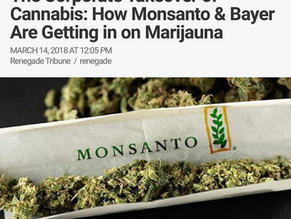 """The Corporate Take Over Of Cannabis: How Bayer """"Monsanto"""" Are Getting in on Marijuana"""