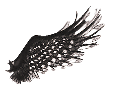 ELLE%2520WING_edited_edited.png