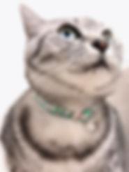 おひるね猫試着02.jpg