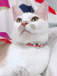 猫特集.jpg