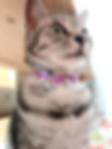 刺繍フリルスワン_パープル01.jpg
