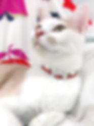 うずまき猫赤02.jpg