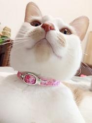 桜猫試着02.jpg