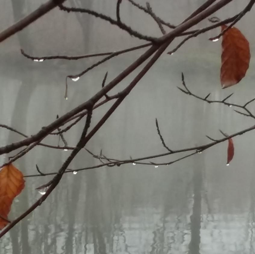Herbstliche Tautropfen