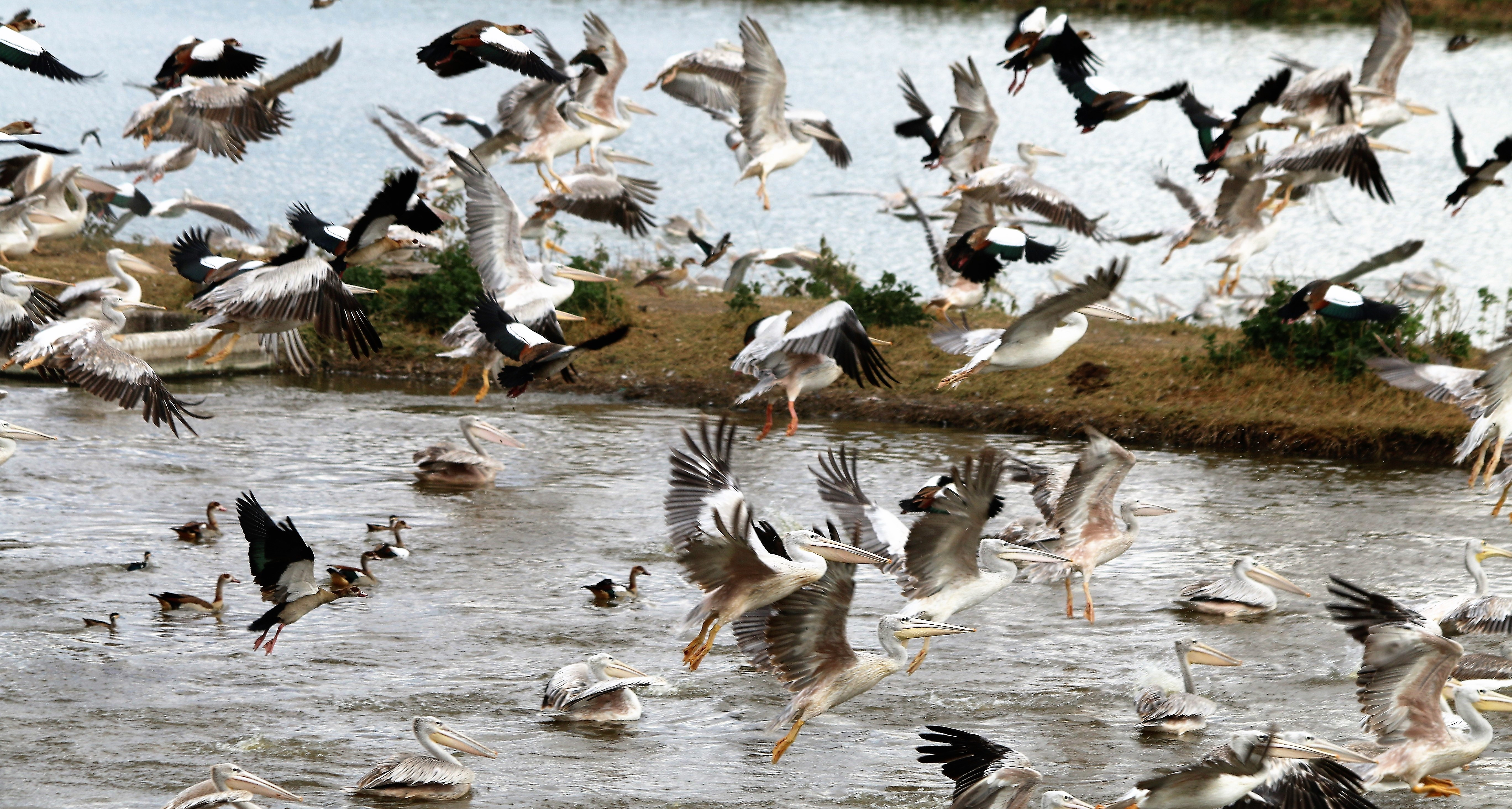 13. Birds taking flight at Town Sewage W