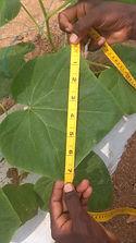 Plant Nutrition Measurig