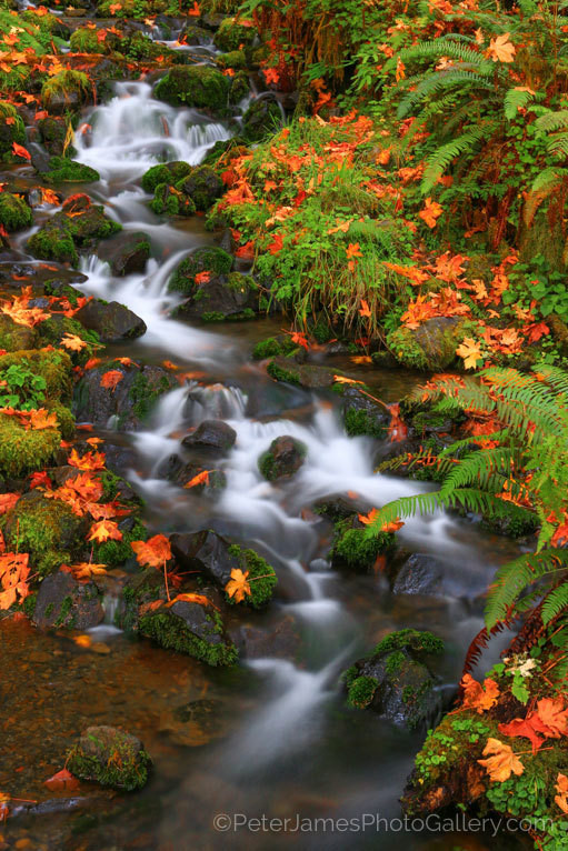 Stunning Fall Color in the Pacific Northwest - Gorgeous Photos printed on metal