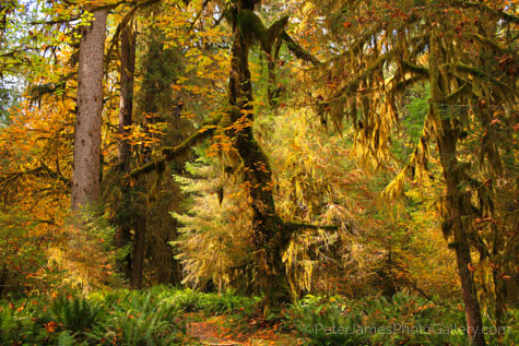 Fine art landscape photographer Peter James captures the essence of the flurry of fall colors in his metal prints.