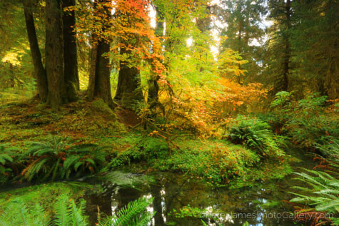 Fall Color in the rivers and the trees with professional photographer Peter James