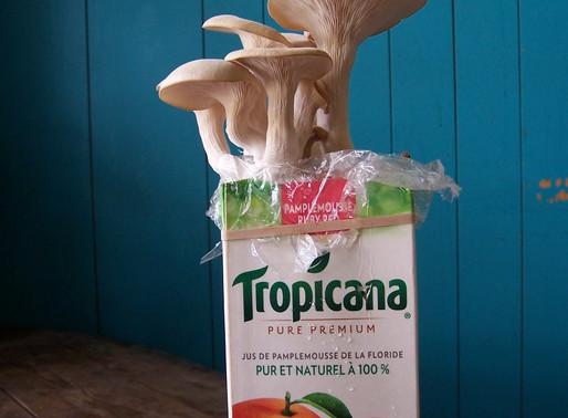 Grow Mushrooms for Food, Medicine, and Earth Renewal!