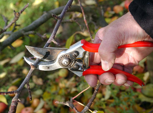 Top 3 Fruit Tree Mistakes And How to Avoid Them