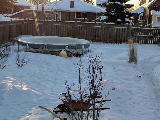 Why I Took Down 5 of My Garden Beds And Put Up a Trampoline