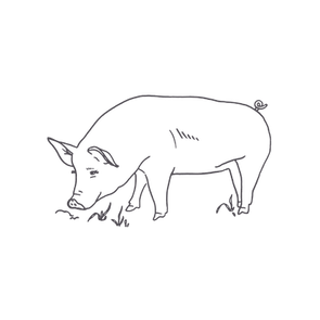 Pig_grey.png