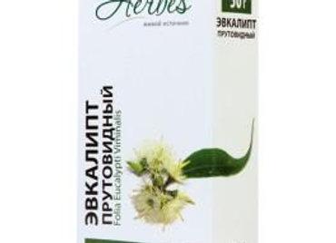 Eucalyptus viminalis (Эвкалипт)