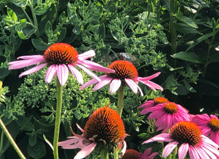VISIT THE SPRING AND WATCH THE MAGIC OF THE POLLINATOR GARDEN