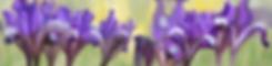FlowersF.png