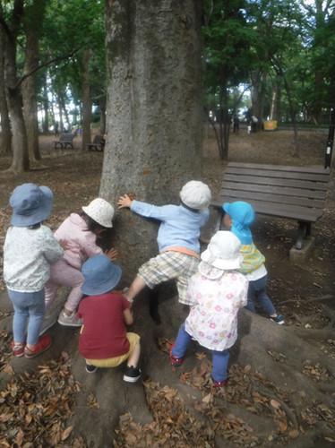 大きな木で遊ぼう