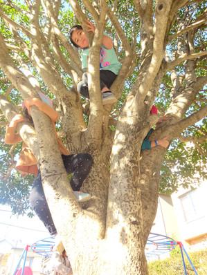 木登り名人