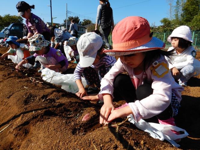 4・5歳児で楽しいお芋掘り