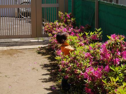 つつじの花に囲まれて