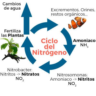 Ciclo del nitrogeno.jpg