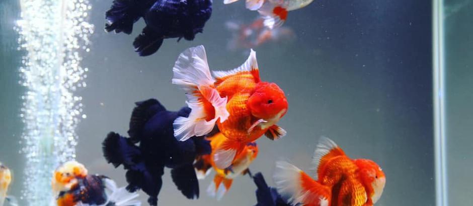 Beneficios de tener un acuario en cualquier ámbito.