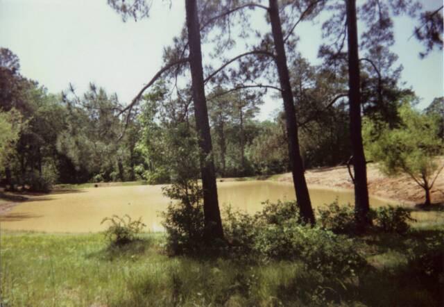 Pond6.jpg